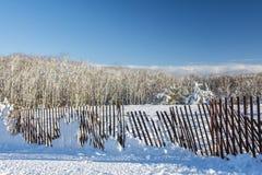 Tempesta della neve Immagini Stock