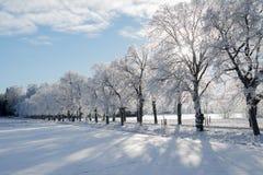 Tempesta della neve che viene in su Immagine Stock Libera da Diritti