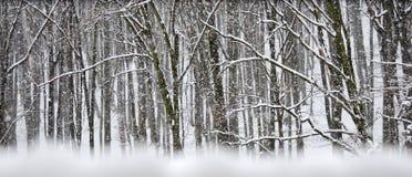Tempesta della neve nella foresta di inverno fotografia stock libera da diritti