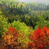 tempesta della pioggia della foresta di caduta Fotografie Stock Libere da Diritti