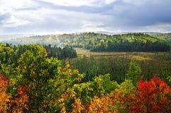 tempesta della pioggia della foresta di caduta Fotografie Stock