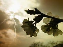 Tempesta della primavera Immagini Stock