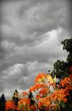 Tempesta di estate Immagine Stock Libera da Diritti