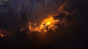Tempesta di fuoco nella foresta al crepuscolo archivi video