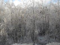 Tempesta di ghiaccio Fotografia Stock