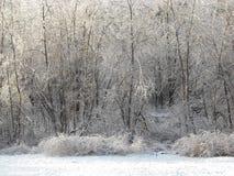 Tempesta di ghiaccio Immagini Stock