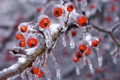 Tempesta di ghiaccio e della neve Immagine Stock