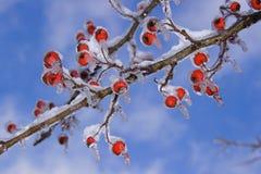 Tempesta di ghiaccio e della neve Fotografia Stock