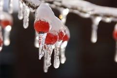 Tempesta di ghiaccio e della neve Fotografie Stock Libere da Diritti