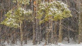 Tempesta di ghiaccio nella foresta video d archivio