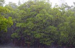 Tempesta nella giungla Immagine Stock