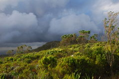 Tempesta Rolls dentro Fotografia Stock Libera da Diritti