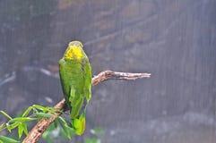 Tempesta tropicale. Fotografia Stock Libera da Diritti