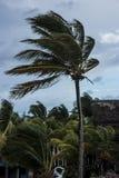Tempesta tropicale Fotografie Stock Libere da Diritti
