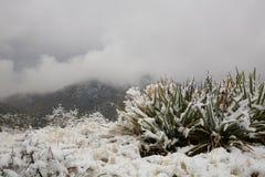 Tempestad de nieve del desierto Fotos de archivo libres de regalías
