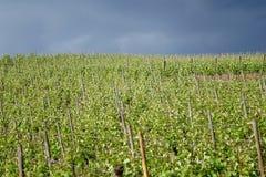 Tempestad de truenos en los viñedos foto de archivo libre de regalías