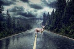 Tempestade com chuva na rua Cervos que estão no meio do th foto de stock