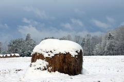Tempestade consultiva do inverno Fotografia de Stock Royalty Free