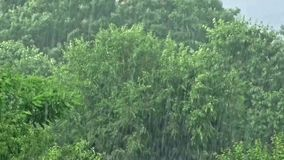 Tempestade da chuva sobre madeiras vídeos de arquivo