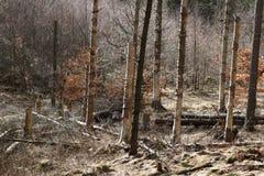 Tempestade da floresta Fotos de Stock Royalty Free