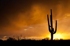 Tempestade da monção de AZ fotografia de stock