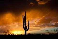 Tempestade da monção de AZ fotografia de stock royalty free