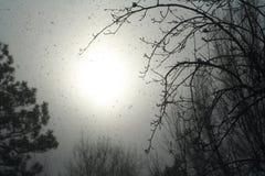 Tempestade da neve Imagem de Stock