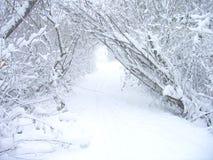 Tempestade da neve Fotografia de Stock