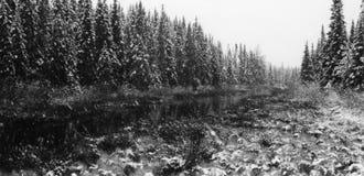 Tempestade da neve da mola Foto de Stock Royalty Free