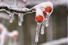 Tempestade da neve e de gelo Fotografia de Stock Royalty Free