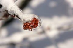 Tempestade da neve e de gelo Imagens de Stock