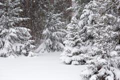 Tempestade da neve em março Imagens de Stock Royalty Free