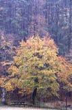 Tempestade da saraiva Foto de Stock