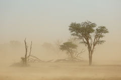 Tempestade de areia - deserto de Kalahari Foto de Stock