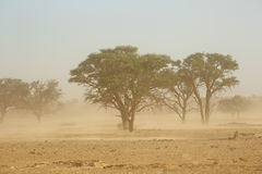 Tempestade de areia - deserto de Kalahari foto de stock royalty free
