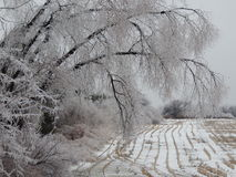 Tempestade de gelo Fotografia de Stock