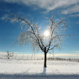 Tempestade de gelo Foto de Stock
