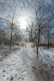 Tempestade de gelo Imagens de Stock Royalty Free
