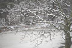 Tempestade de gelo Fotos de Stock Royalty Free