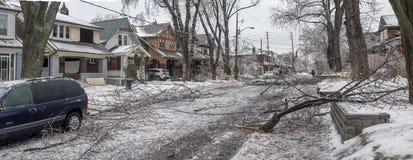 Tempestade de gelo de Toronto Fotografia de Stock Royalty Free