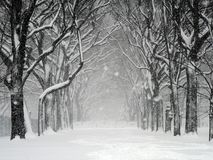 Tempestade de neve de Central Park fotos de stock royalty free