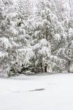 Tempestade de neve na floresta nacional de Chattahoochee fotos de stock