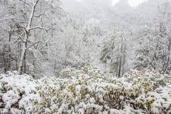 Tempestade de neve na floresta nacional de Chattahoochee imagem de stock royalty free