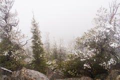 Tempestade de neve nas montanhas Fotos de Stock