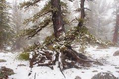 Tempestade de neve nas montanhas Fotografia de Stock