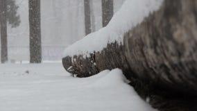 Tempestade de neve real em uma madeira ucraniana com um tronco de árvore caído vídeos de arquivo