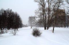 A tempestade de neve varre o rio e o bosque na costa fotos de stock royalty free