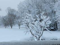 Tempestade do inverno Foto de Stock