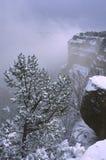 Tempestade do inverno na garganta grande Fotos de Stock Royalty Free
