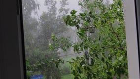 Tempestade e chuva torrencial pesadas A vista da janela Os ramos de ?rvore dobram-se para baixo diretamente na sala video estoque